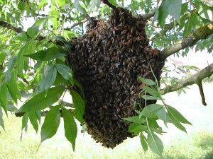 Swarm on Branch