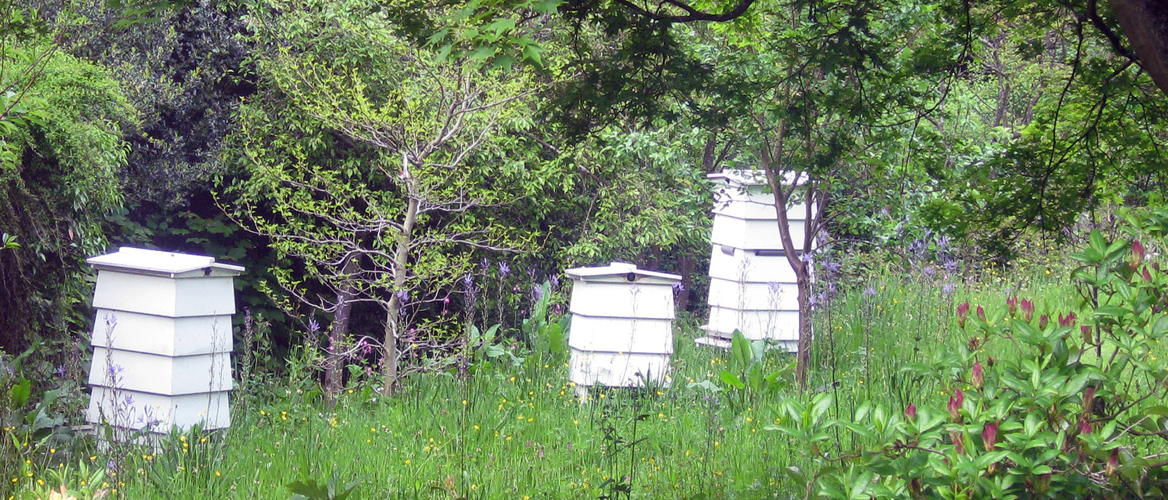 WBC 'Picture Postcode' Hives